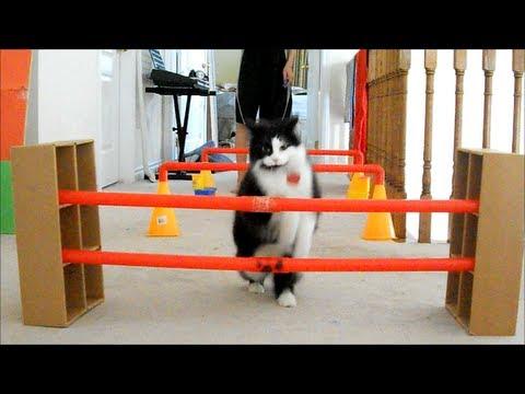 ネコを鍛えまくる半裸の少年